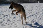 Snow Dog 46