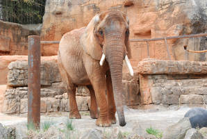 Greenville Zoo 71