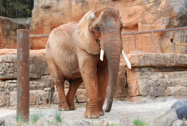 Greenville Zoo 72 by lumibear
