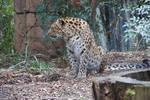 Greenville Zoo 118