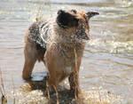 Water Beast 143