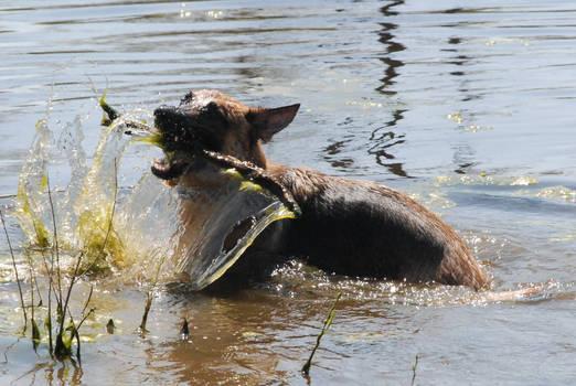 Water Beast 164