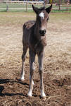 Nurse Mare Foals 1