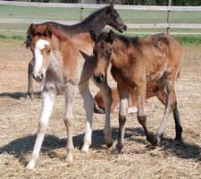 Nurse Mare Foals 4 by lumibear