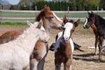 Nurse Mare Foals 21
