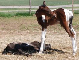 Nurse Mare Foals 45 by lumibear