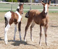 Nurse Mare Foals 51 by lumibear