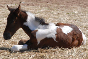 Nurse Mare Foals 60 by lumibear