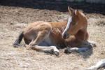 Nurse Mare Foals 73