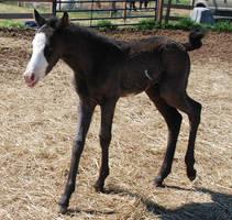 Nurse Mare Foals 93 by lumibear