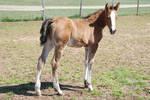 Nurse Mare Foals 94