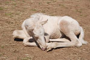 Nurse Mare Foals 103 by lumibear