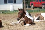Nurse Mare Foals 112