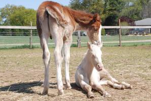 Nurse Mare Foals 113 by lumibear