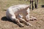 Nurse Mare Foals 116