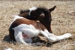 Nurse Mare Foals 119
