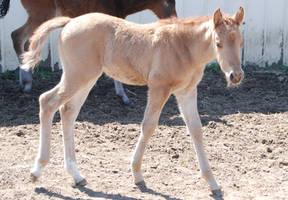 Nurse Mare Foals 139 by lumibear