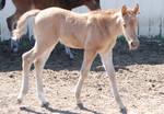 Nurse Mare Foals 139