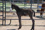 Nurse Mare Foals 152