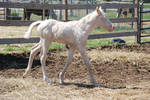 Nurse Mare Foals 153