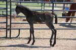 Nurse Mare Foals 154