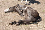 Nurse Mare Foals 163