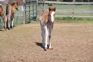 Nurse Mare Foals 189 by lumibear
