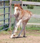 Nurse Mare Foals 200