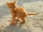 Soaked Kitten 02