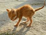 Soaked Kitten 03
