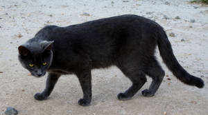 Cats 05