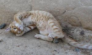 Cats 026 by lumibear