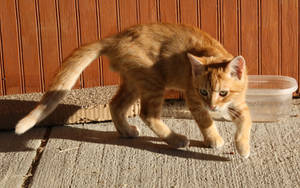 Cats 033 by lumibear