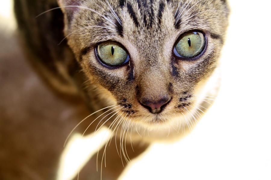 Cats 041
