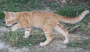 Cats 053