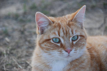 Cat Stock 046 by lumibear