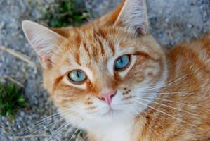 Cat Stock 085 by lumibear