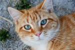 Cat Stock 085