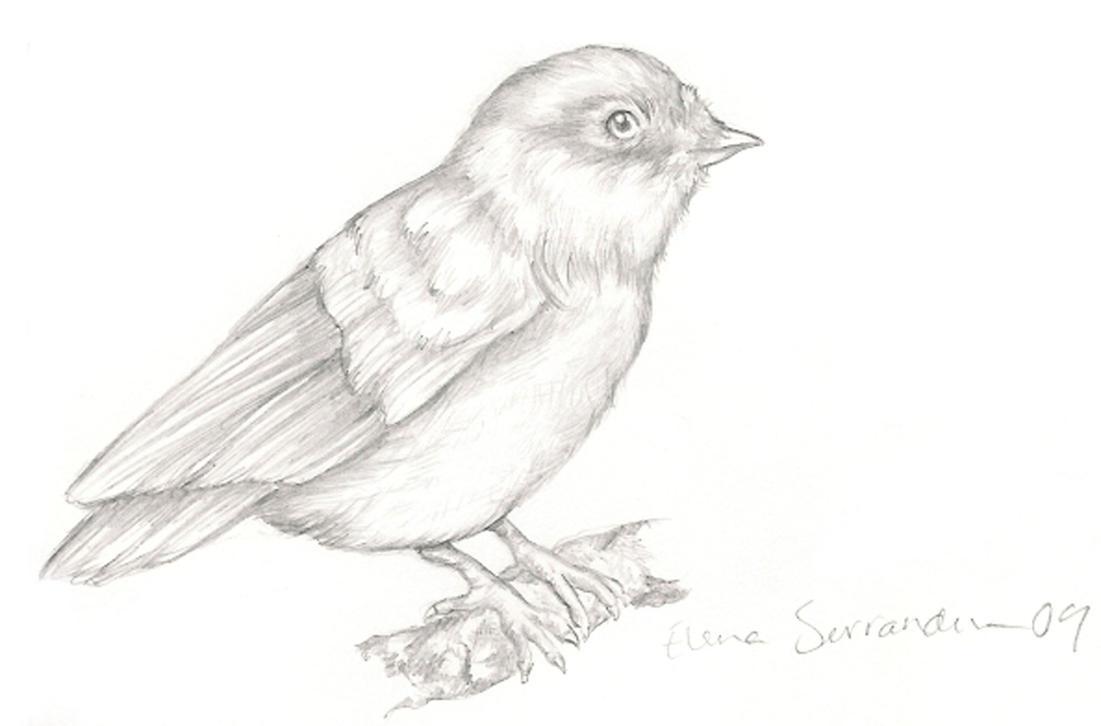 bird drawingeleihna on deviantart