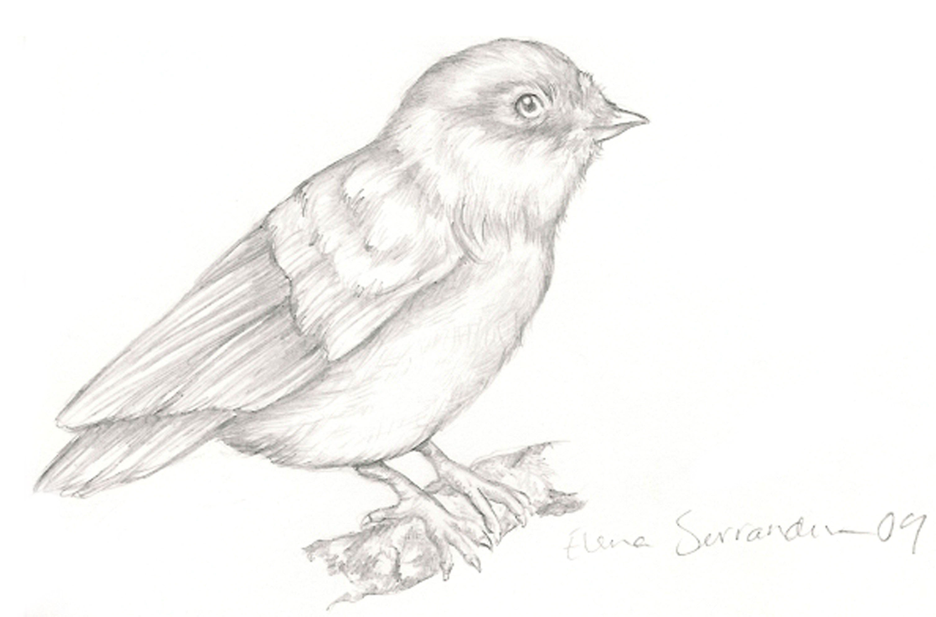 bird drawing by eleihna on deviantart
