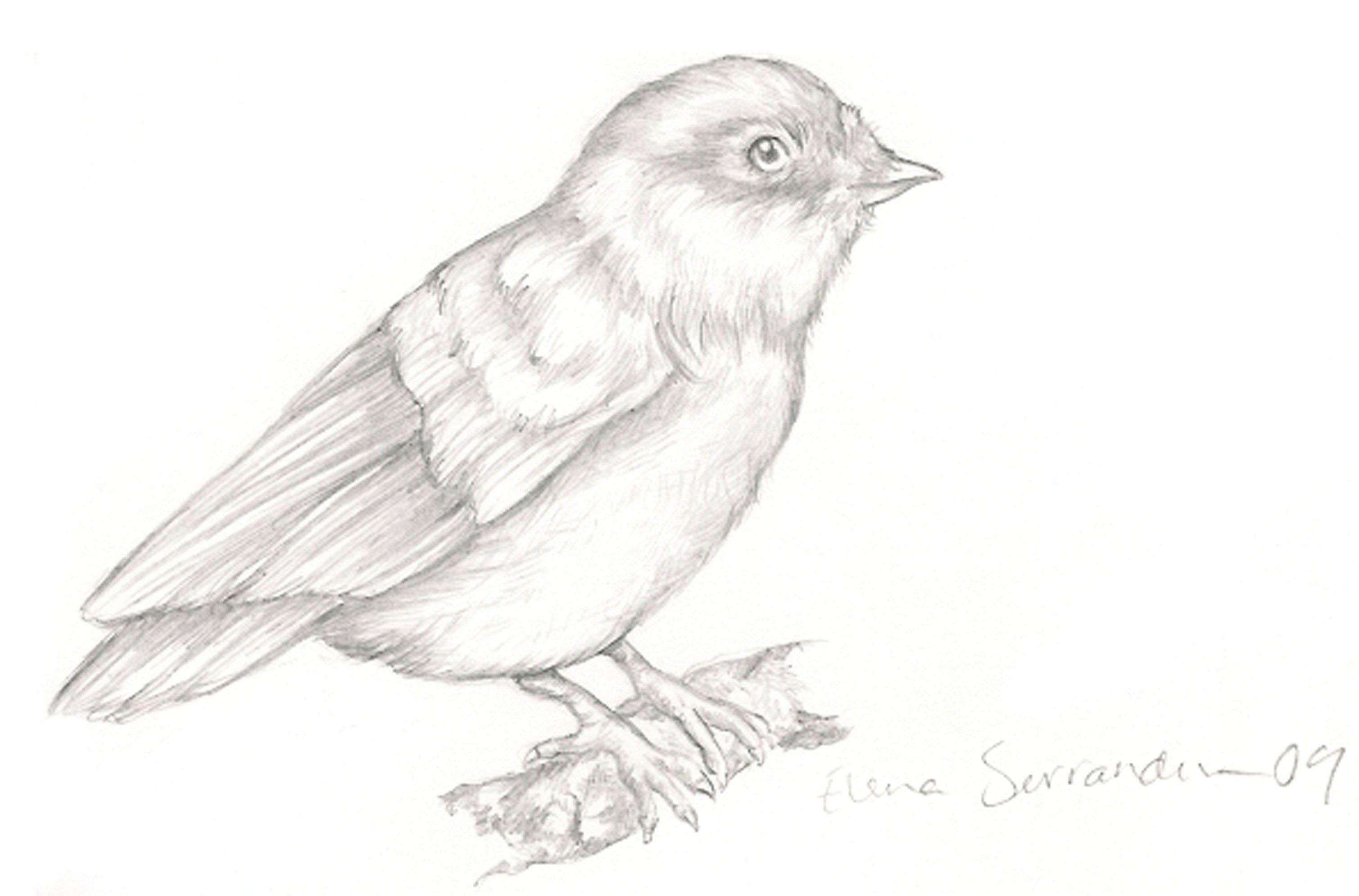 Easy Birds Drawing - HD Photos Gallery