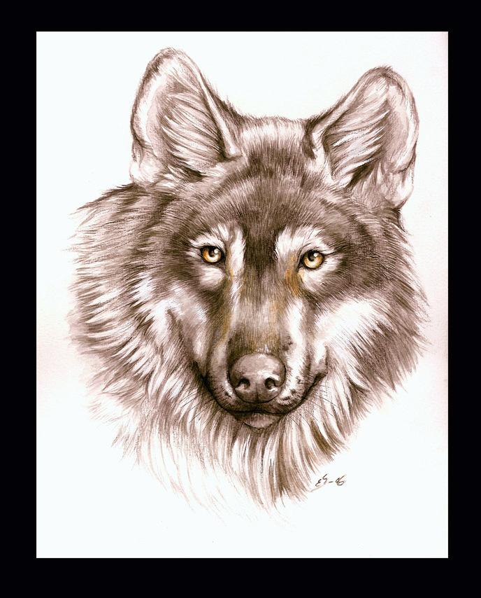 Wolf portrait by Eleihna