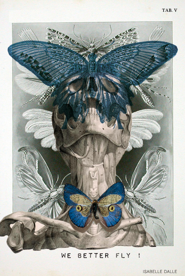 ANATOMY \'We Better Fly\' by IsabelleDalle on DeviantArt