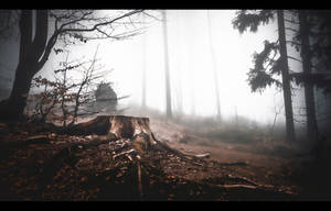 Dark Forest Tales