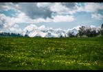 Meadows of Heaven