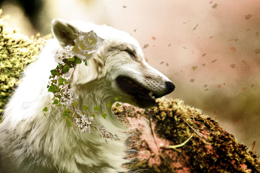 Dunkelbunt by VanillaCookieFox