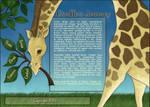 Giraffes Journey
