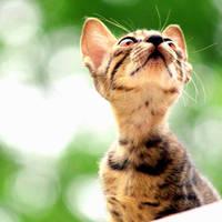 Looking Up by Momoksha