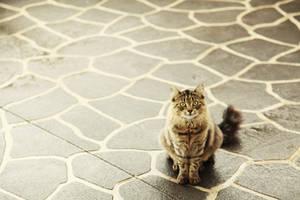 Cat by emantaleb