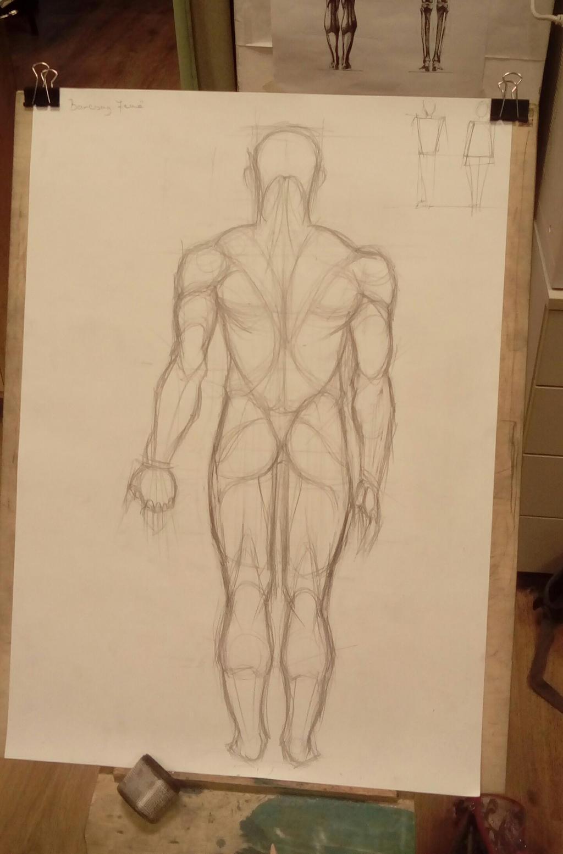 human muscle study by szollosianna on deviantart, Muscles